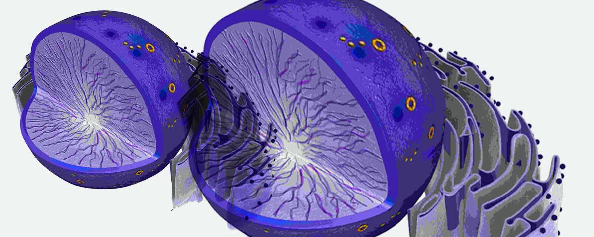 laser frazionato cellule nuove